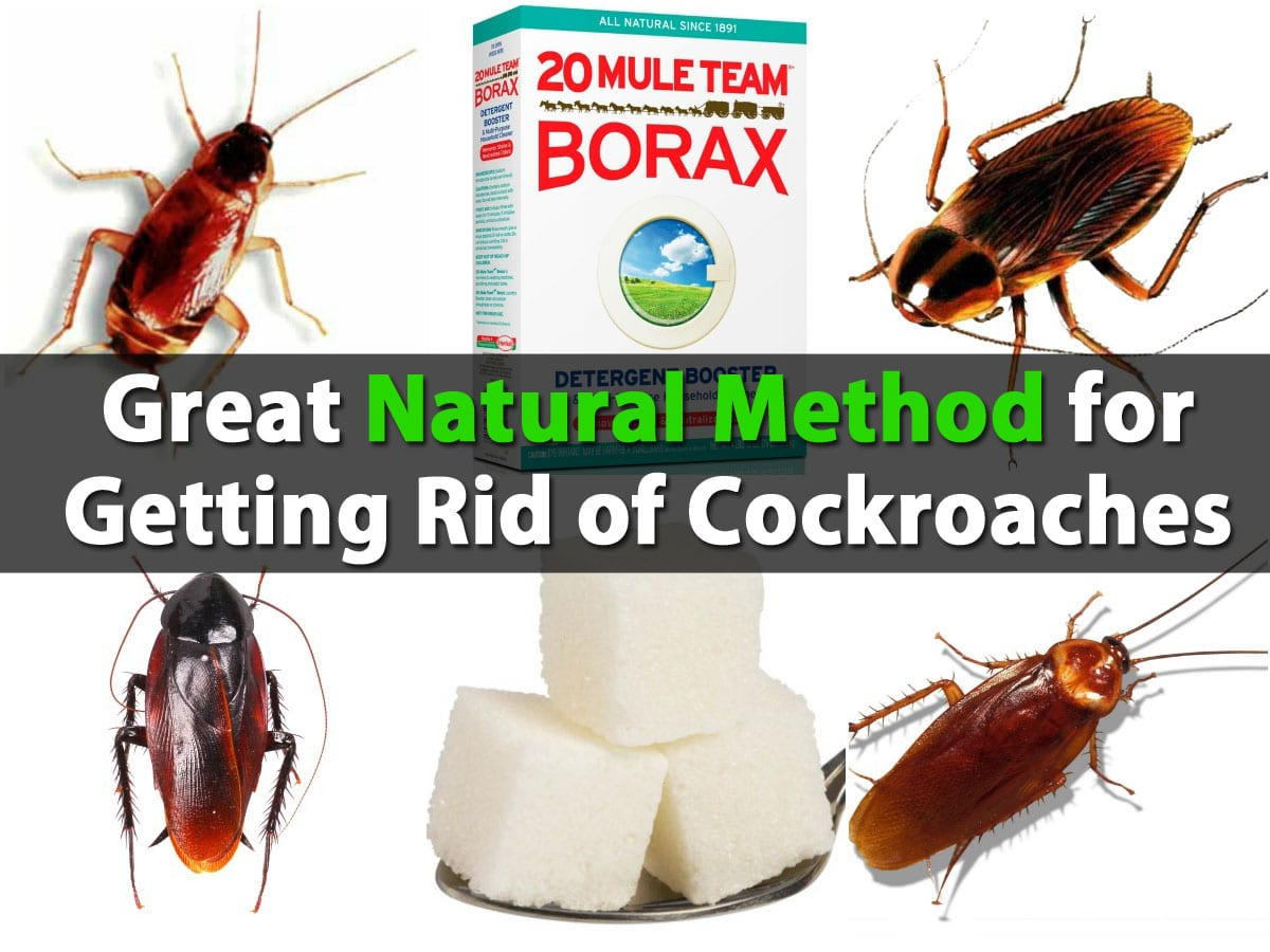 great natural method for getting rid of cockroaches - diy & crafts