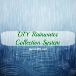 Run a Greener Home – Build Your Own Rainwater Collection System