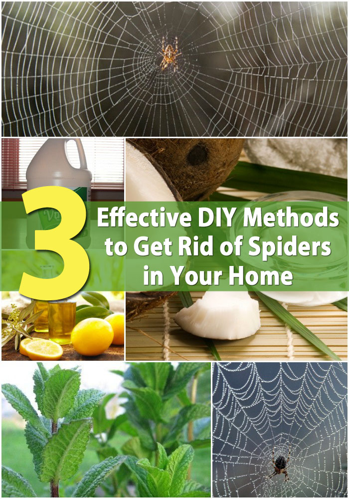 48 Effective DIY Methods To Get Rid Of Spiders In Your Home DIY Classy How To Get Rid Of Spiders In Bedroom