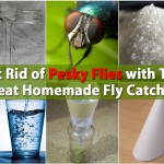 Get Rid of Pesky Flies with This Neat Homemade Fly Catcher