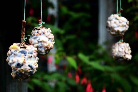 Pinecone Feeders - 23 DIY Birdfeeders That Will Fill Your Garden With Birds