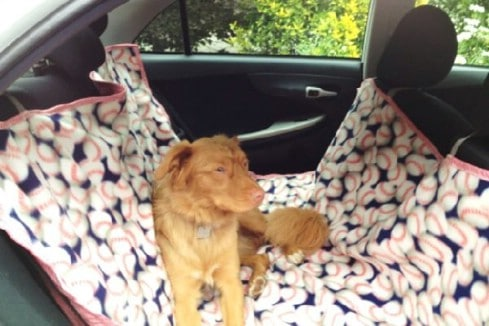 Organize the Dog - 20 Easy DIY Ideas and Tips for a Perfectly Organized Car