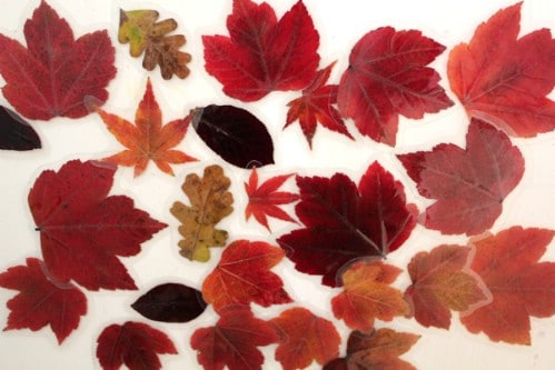 Leaf Magnets - 15 Fabulous Fall Leaf Crafts for Kids