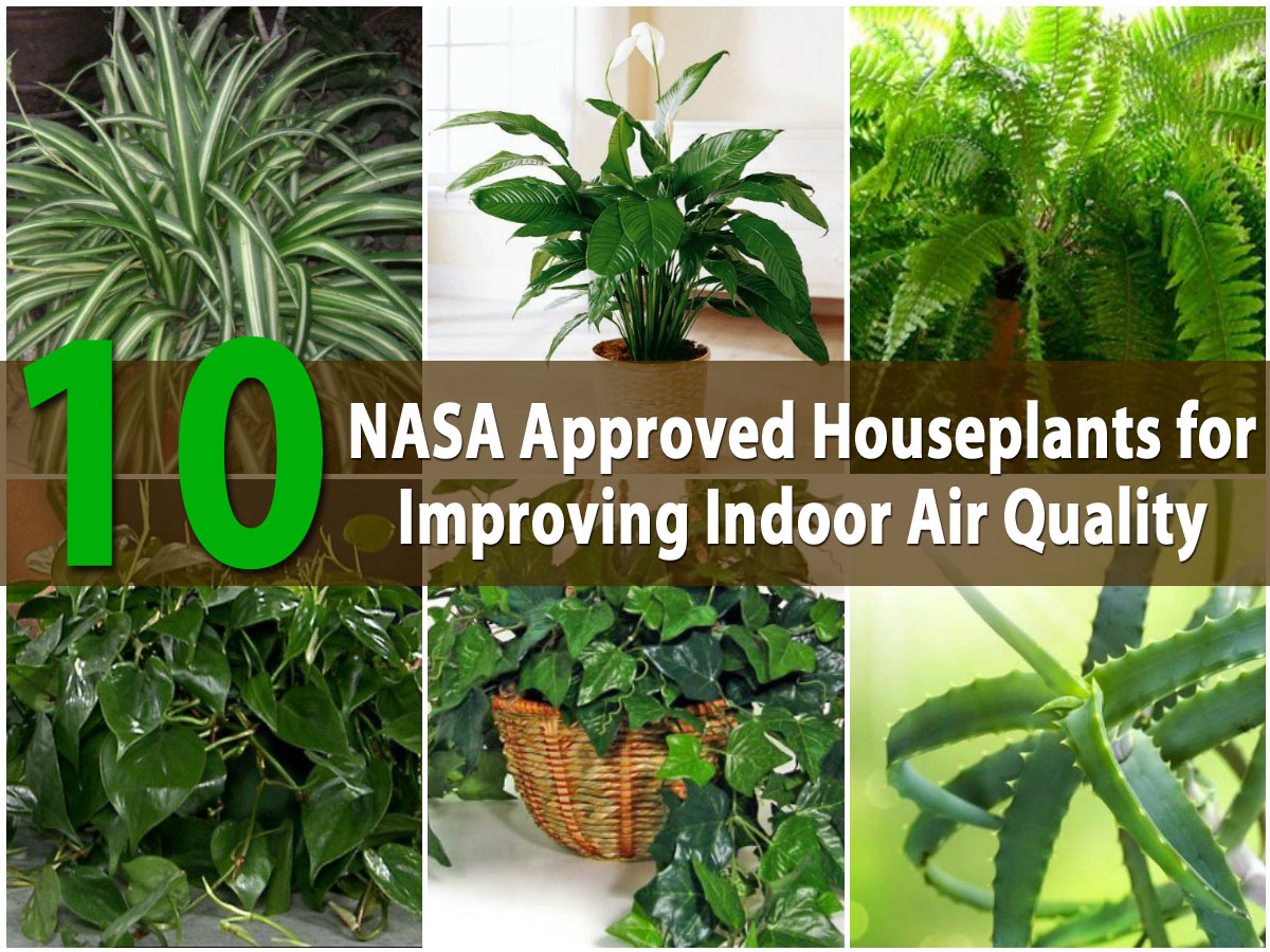 Top 10 Nasa Roved Houseplants For Improving Indoor Air Quality Diy Crafts
