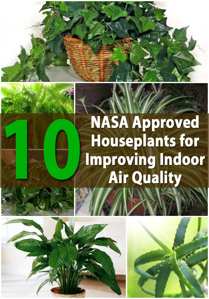Top 10 nasa approved houseplants for improving indoor air for Good plants to have indoors