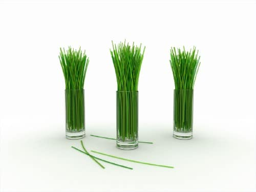 3. Lemongrass - 25 Foods You Can Re-Grow Yourself from Kitchen Scraps