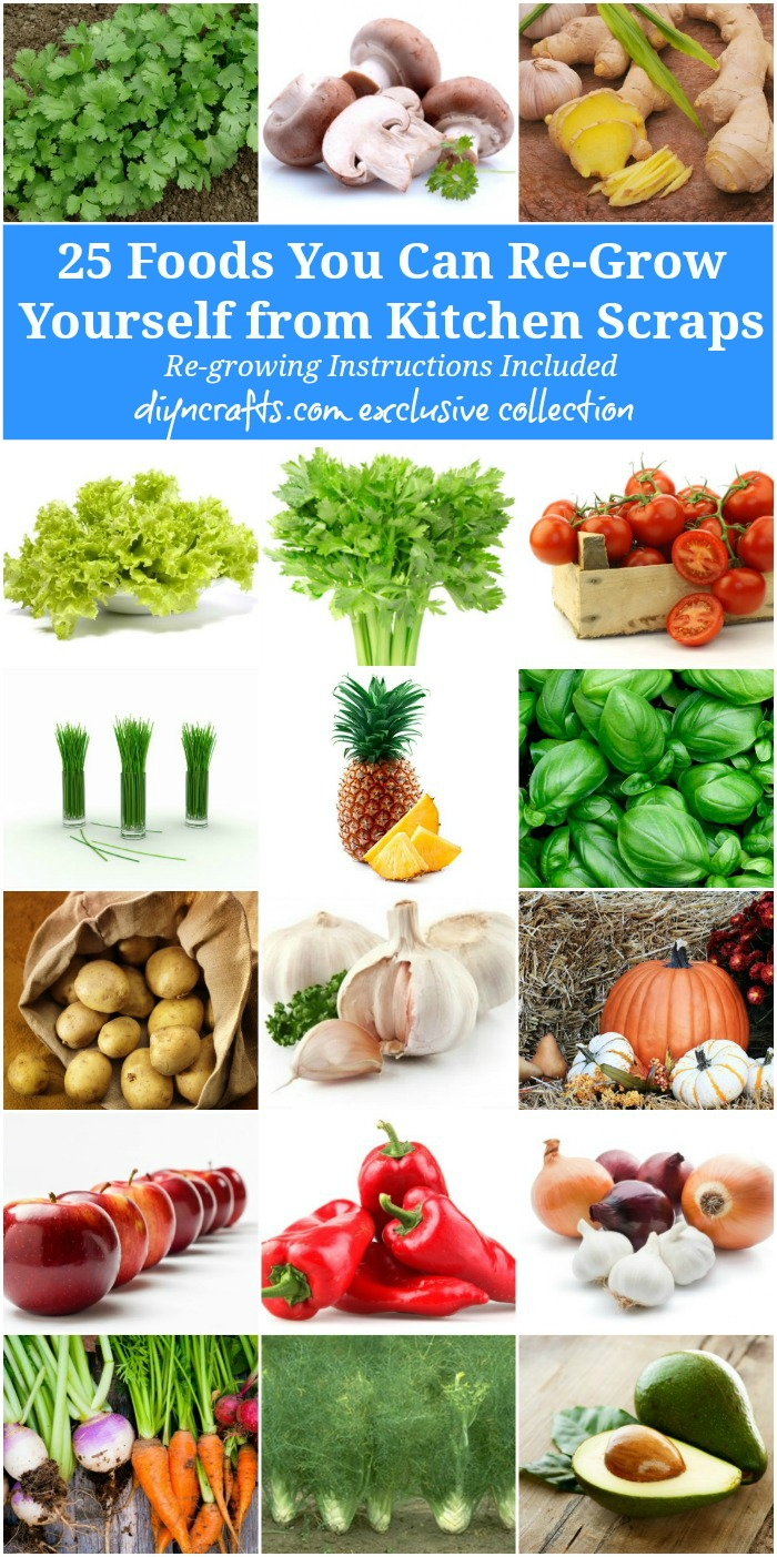 Amazing 25 Foods You Can Re Grow Yourself From Kitchen Scraps