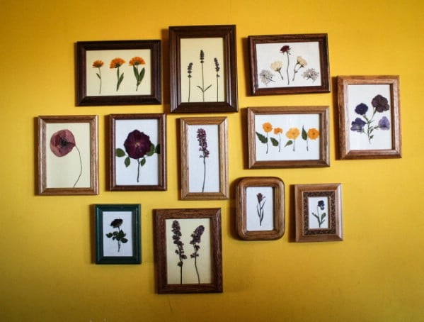 Beautiful Diy Way To Display Pressed Flowers Diy Crafts