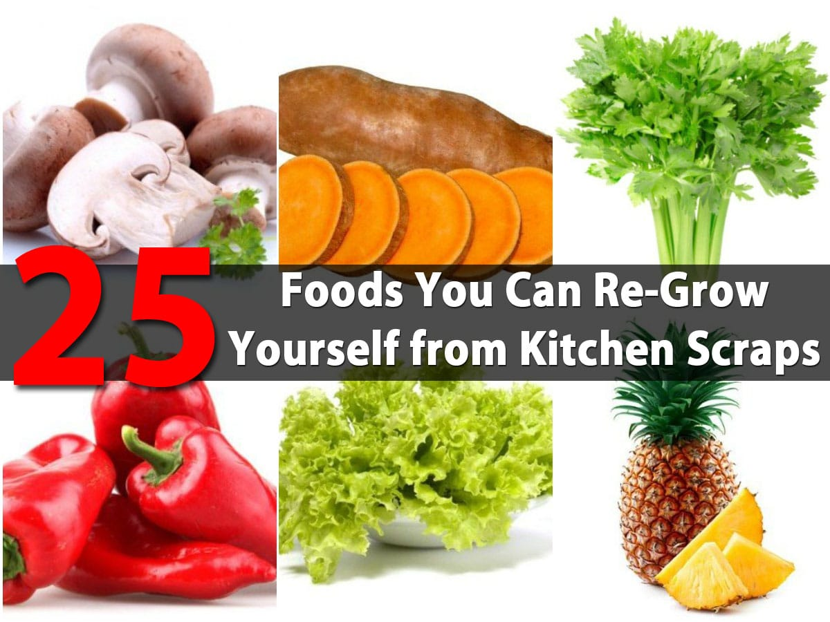 25 foods you can re grow yourself from kitchen scraps page 2 of