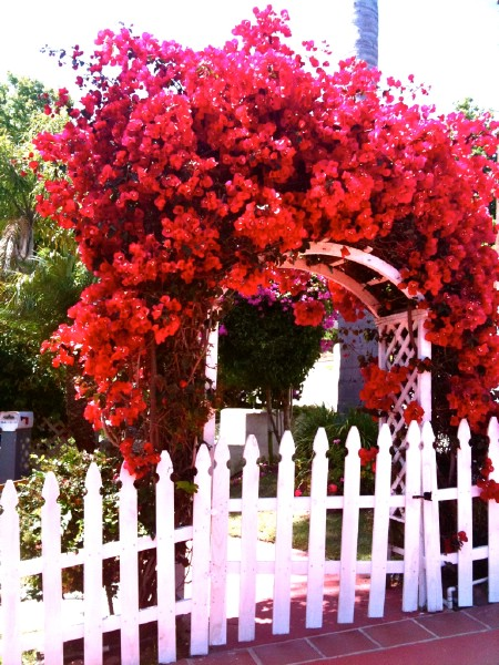 Create A Botanical Archway - 150 Remarkable Projects and Ideas to Improve Your Home's Curb Appeal