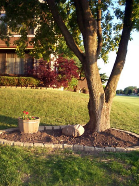 Cover Bare Spots - 150 Remarkable Projects and Ideas to Improve Your Home's Curb Appeal