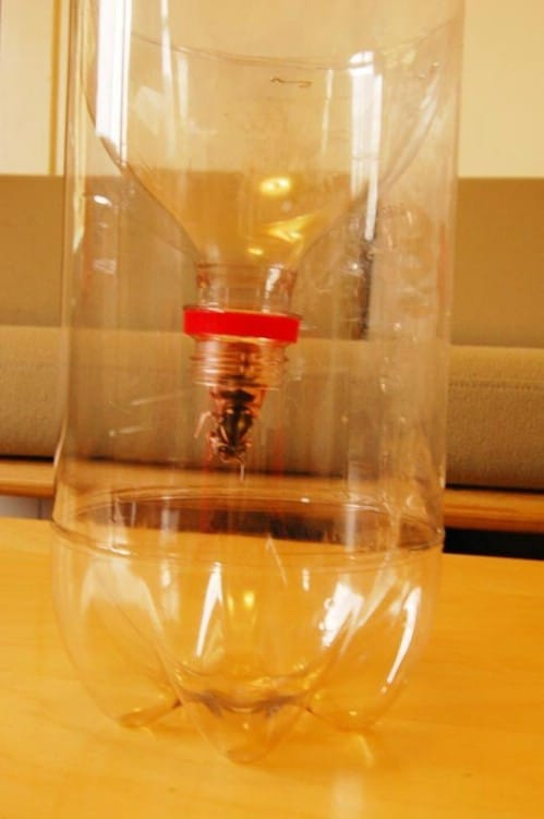Wasp Trap - 20 Fun and Creative Crafts with Plastic Soda Bottles