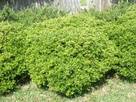 Plant Shrubs - 150 Remarkable Projects and Ideas to Improve Your Home's Curb Appeal