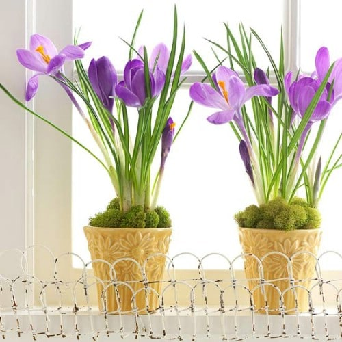 Potted Plant Décor - 80 Fabulous Easter Decorations You Can Make Yourself
