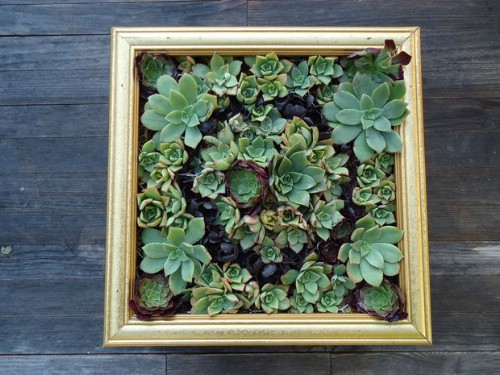 Succulent Gardens - 40 Genius Space-Savvy Small Garden Ideas and Solutions