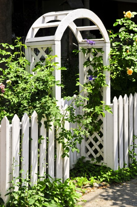 Plant Vines - 150 Remarkable Projects and Ideas to Improve Your Home's Curb Appeal
