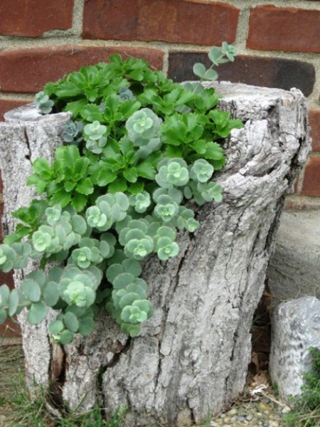 Disguise Tree Trunks - 150 Remarkable Projects and Ideas to Improve Your Home's Curb Appeal