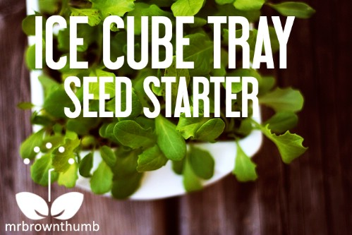 Make Your Own Seed Starters