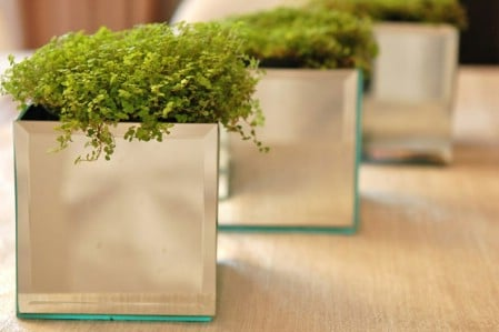 Mirrored Planters