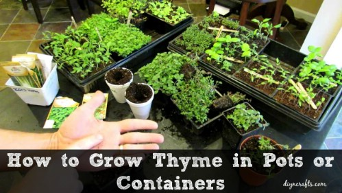 Grow A Garden In Pots The 35 easiest container and pot friendly fruits vegetables and you can actually have an herb garden in containers and plant your thyme with workwithnaturefo