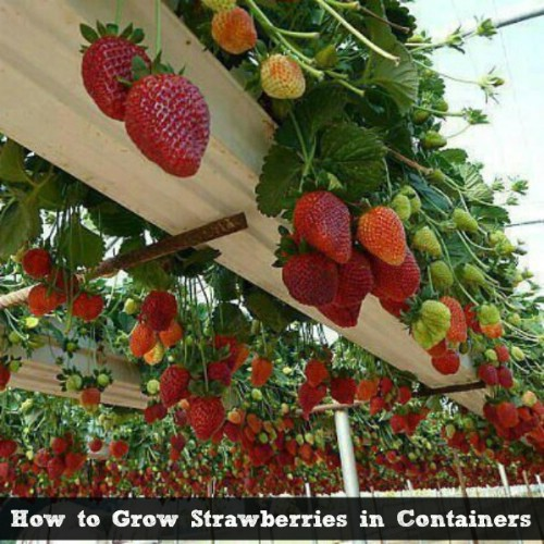 The 35 easiest container and pot friendly fruits vegetables and herbs diy crafts - Soil for container vegetable gardening ...