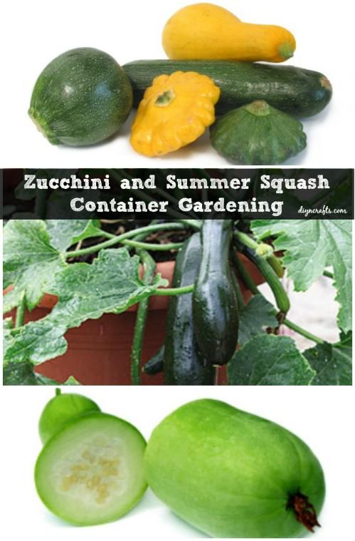 Zucchini and Summer Squash