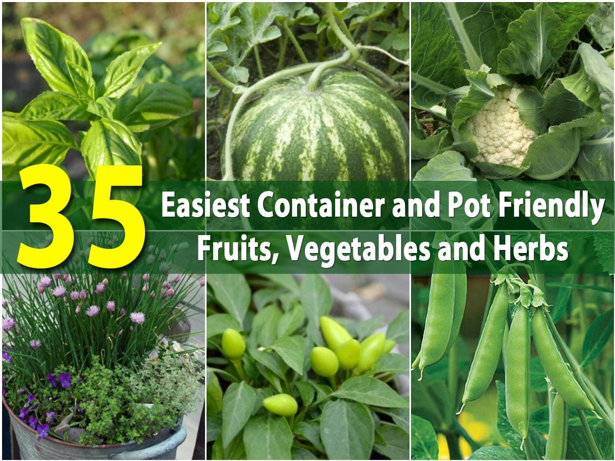 Fruit And Vegetable Garden Ideas Part - 42: The 35 Easiest Container And Pot Friendly Fruits, Vegetables And Herbs -  DIY U0026 Crafts