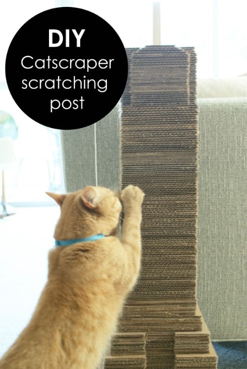 20 Purrfect Diy Projects For Cat Owners Diy Amp Crafts
