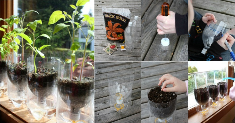 Recycle Plastic Bottles Into Self Watering Seed Starter