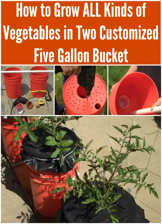 Superbe How To Grow ALL Kinds Of Vegetables In Two Customized Five Gallon Buckets