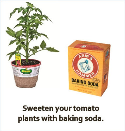 Grow sweeter tomatoes using baking soda.