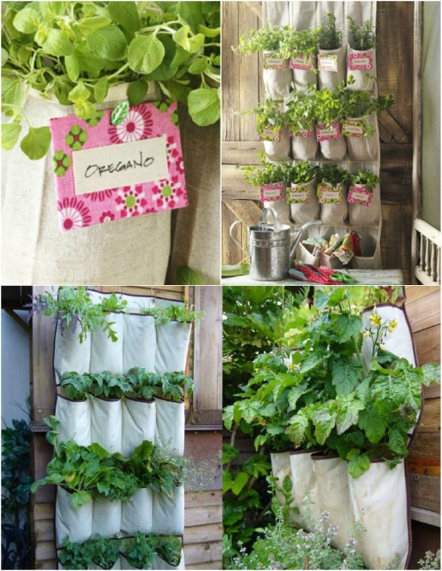 Shoe organizer planter