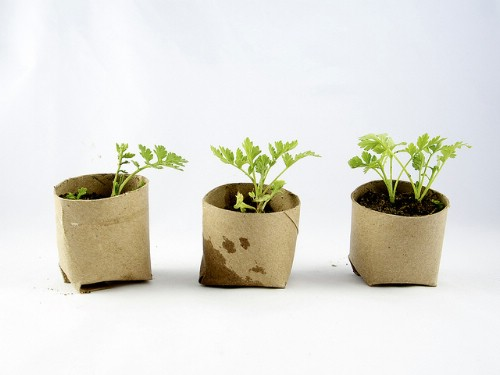 Repurpose toilet paper rolls for seedling starters.