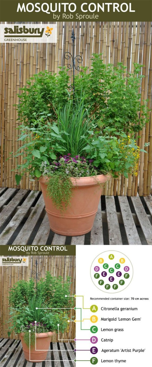 Mosquito control herbs.