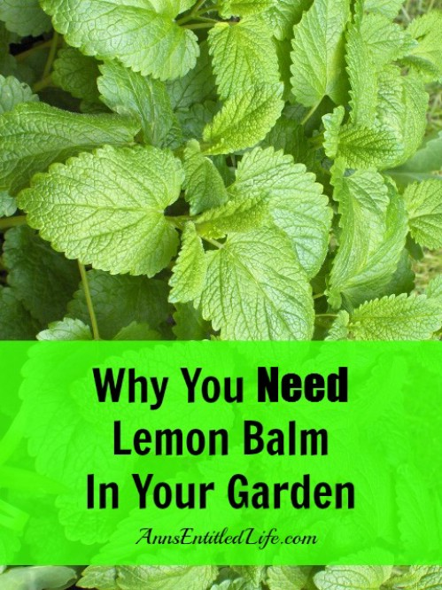 Learn why lemon balm is amazing.
