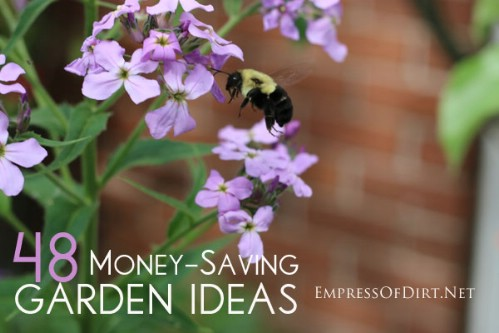 Get 48 gardening tips which will help you save money.
