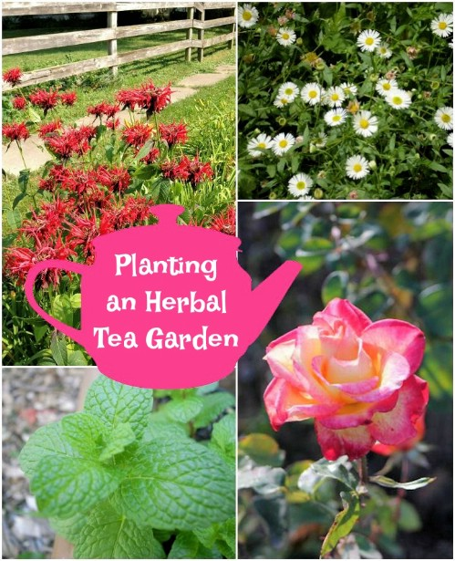 Grow your own herbal tea garden.