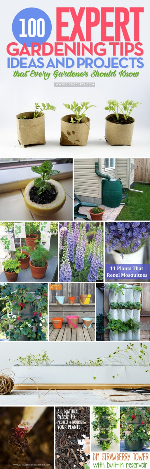 100 Expert #Gardening #Tips, #Ideas and #Projects that Every #Gardener Should Know