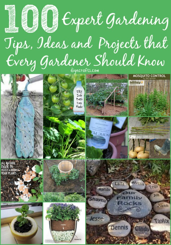 100 Expert Gardening Tips, Ideas And Projects That Every Gardener Should  Know. Spectacularly Impressive