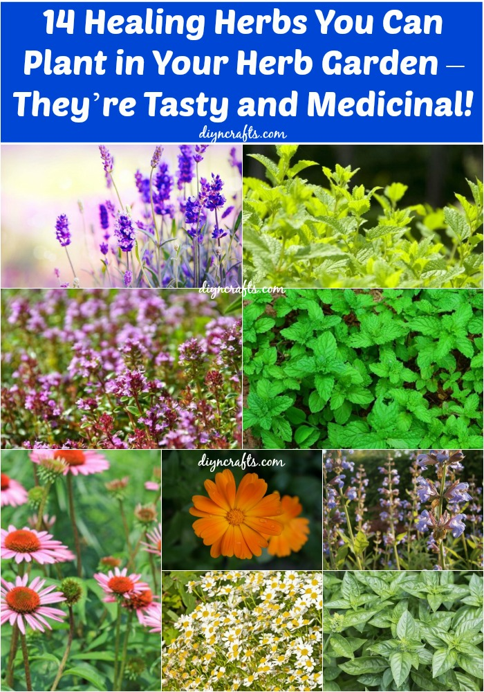 14 Healing Herbs to Plant in Your Herb Garden Theyre Tasty and