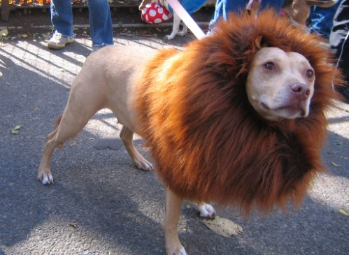 These 24 halloween pet costumes may just be better than your own simba solutioingenieria Image collections