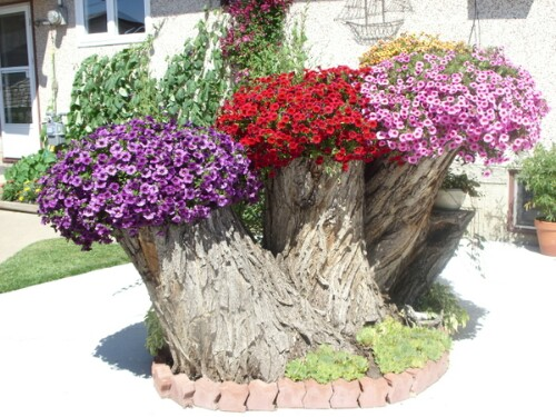 Pansies and Petunias