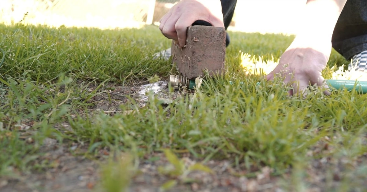 how to get rid of black ants at home