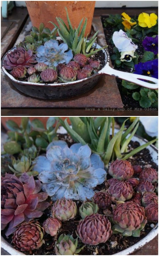 Repurposed Pots And Pans Into Succulent Planters