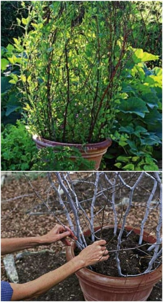 20 easy diy trellis ideas to add charm and functionality to your diy branch trellis in a pot solutioingenieria Image collections