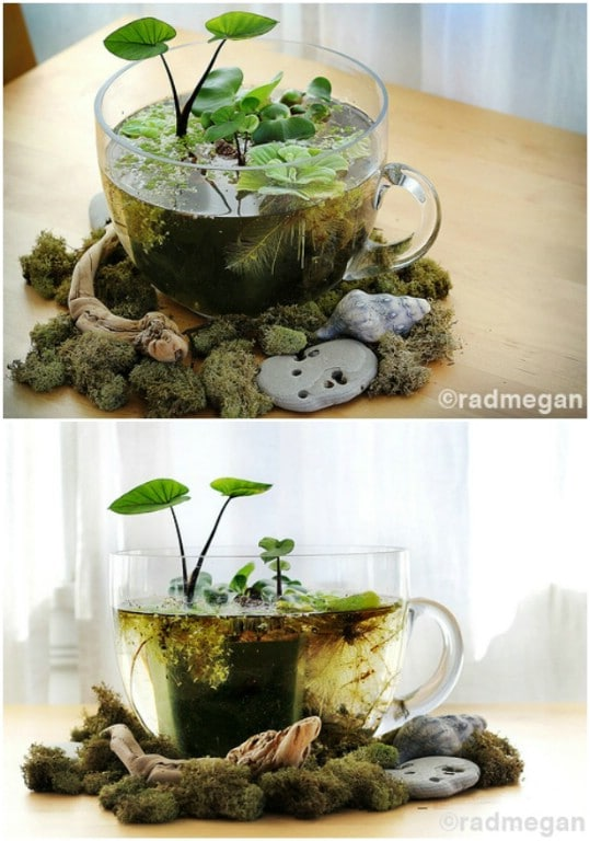 20 charming and cheap mini water garden ideas for your home and diy indoor mini water garden workwithnaturefo