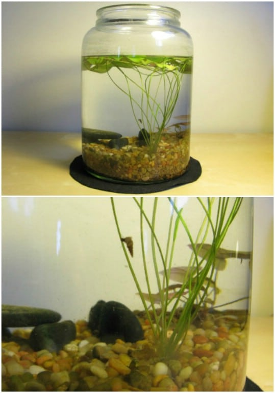 Easy Indoor Pond In A Jar