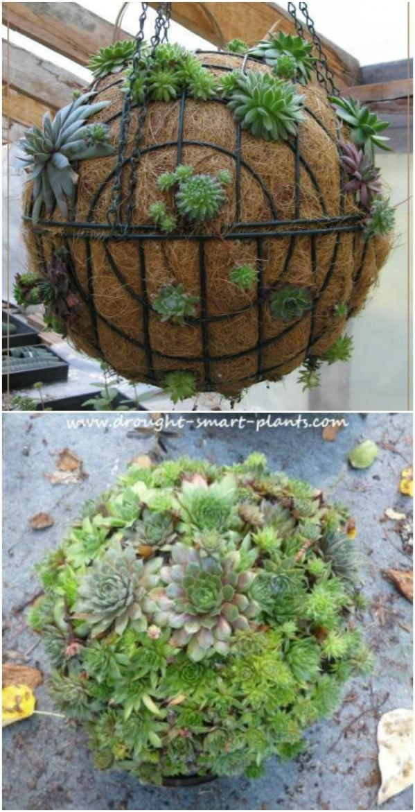 15 Easy Diy Backyard Succulent Garden Ideas Style Motivation