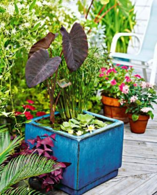 Cheap Gardening Ideas: 20 Charming And Cheap Mini Water Garden Ideas For Your