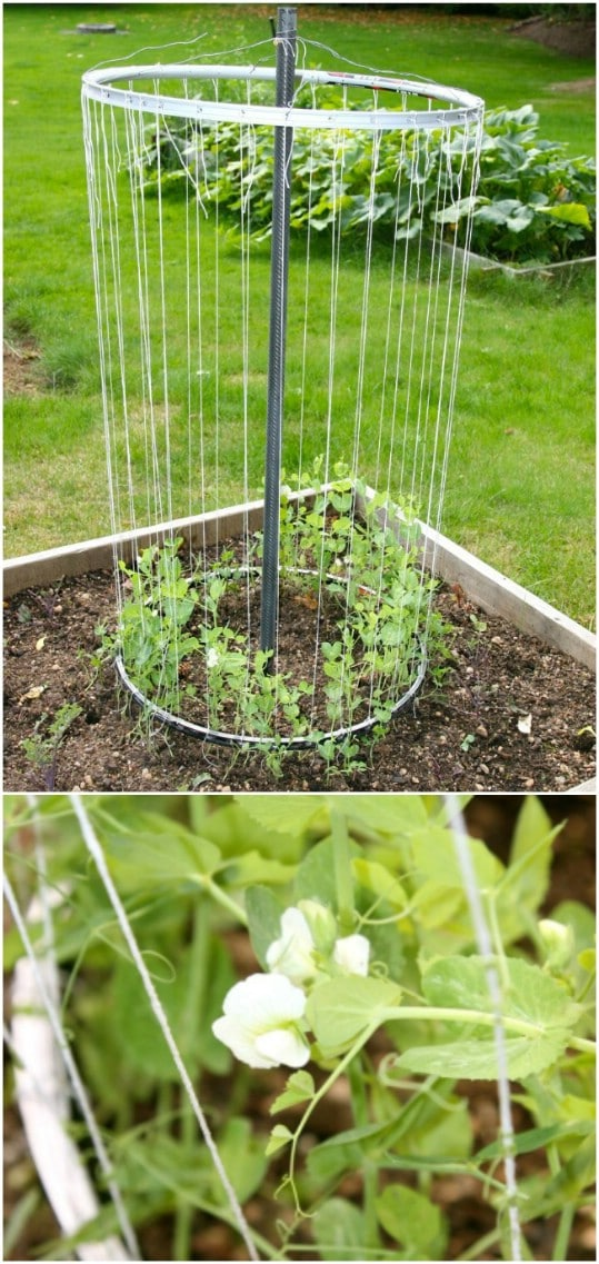 Diy Trellis Ideas Part - 41: Easy DIY Bike Rim Trellis